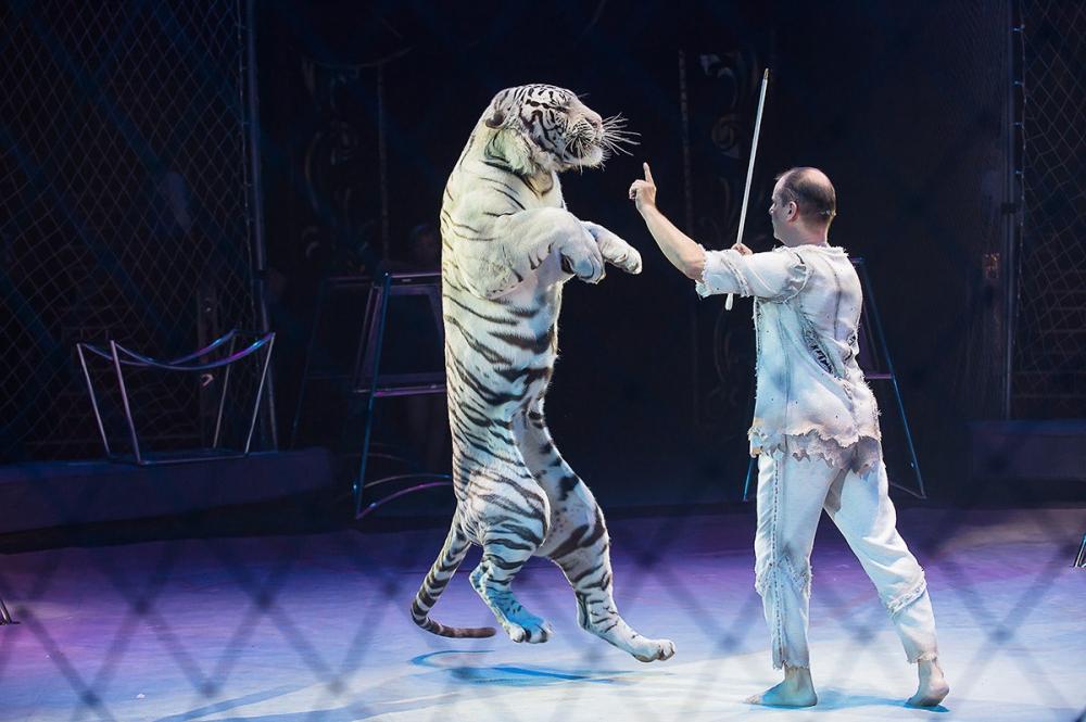 Идол 2015, Всемирный Фестиваль Циркового Искусства