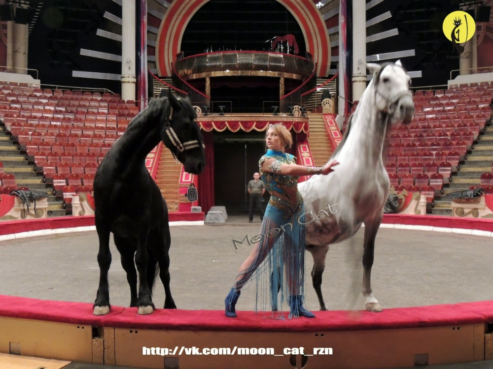 Анастасия Стыкан-Федотова - Дрессировщица лошадей